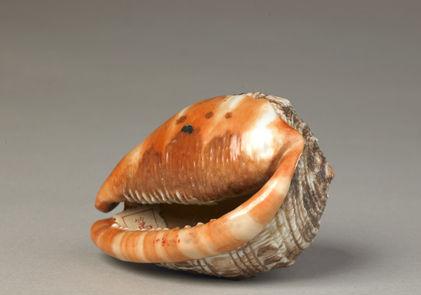 清乾隆像生瓷海螺